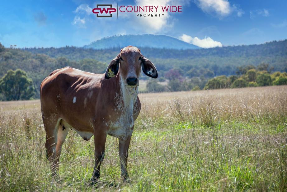 Rural Property & Farms for Sale - 3081 Rocky Creek Road - Farm Property