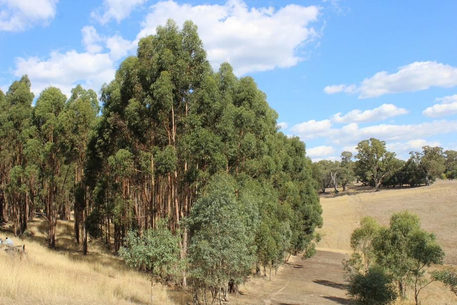Tallengower Road, Chetwynd, VIC 3312