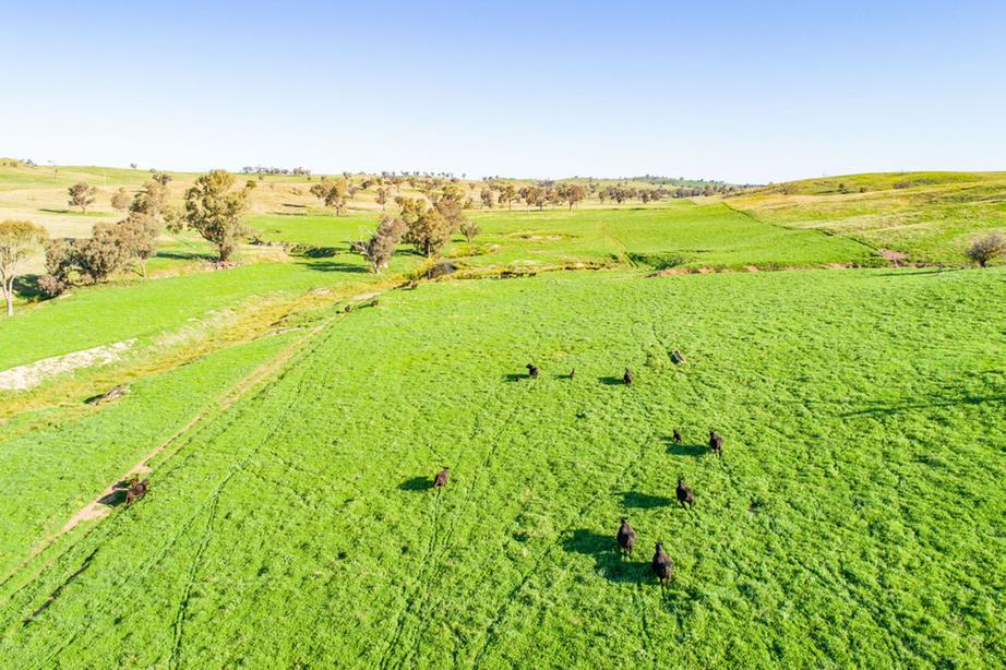 Rural Property & Farms for Sale - 395 Old Yullundry Road - Farm Property