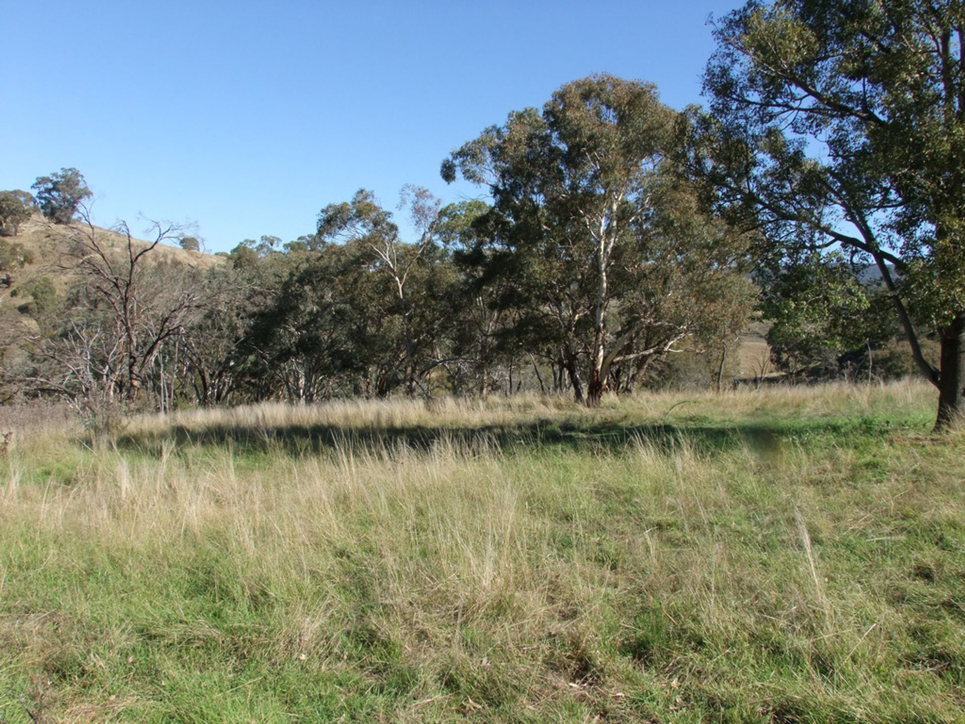 1964 The Bridle Track, Bruinbun, NSW  2795