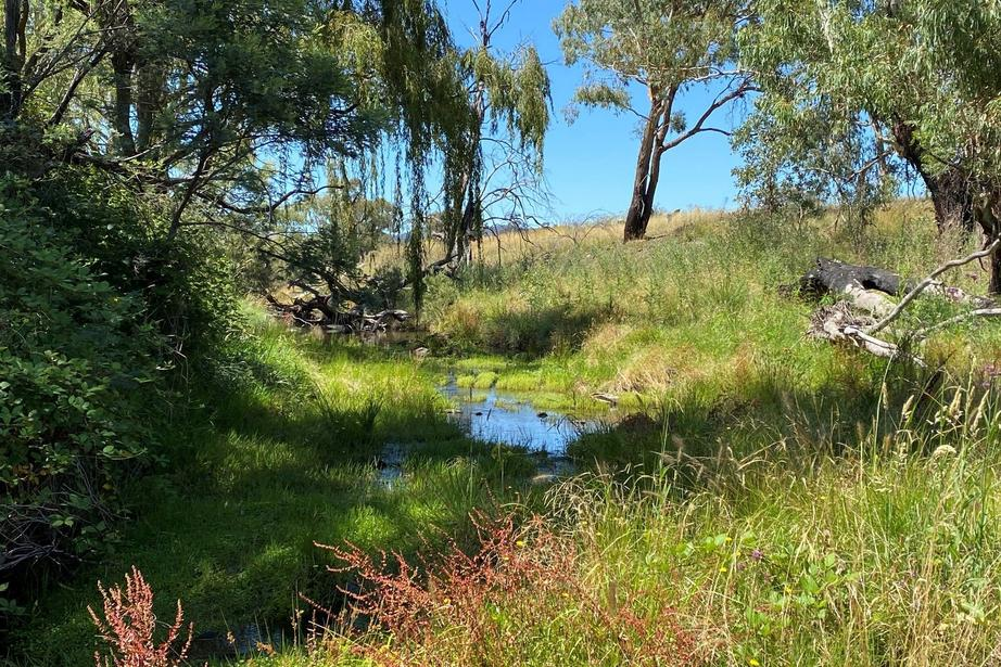 Campbells Creek Road, Mudgee, NSW 2850
