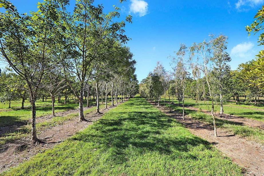 190 McGilchrist Road, Palmwoods QLD
